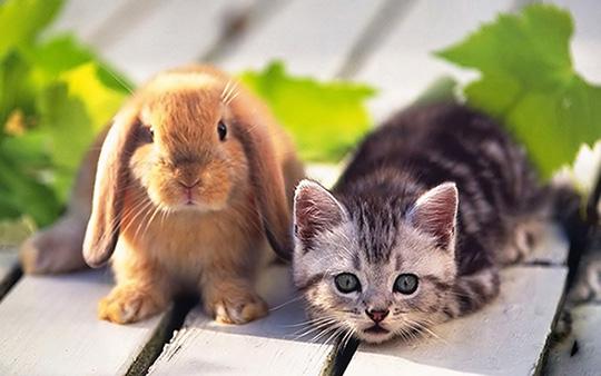 kitty-bunny-pets