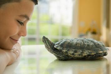tortoise-pet
