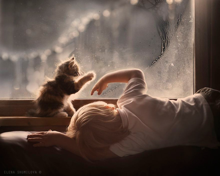 Boy and his cat next to the window