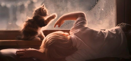 31 Heartwarming Photos Of Kids Playing With Their Cats