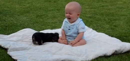 puppy-and-baby